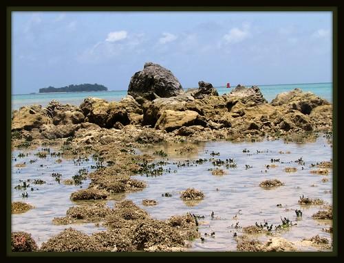 coral landscape saipan lavarock cnmi northernmarianasislands