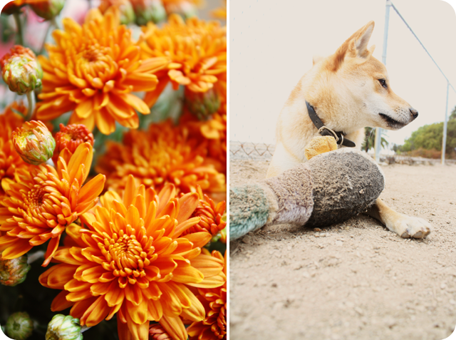 {tuesday} flowers | puppy playing