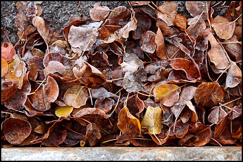 Leaves at the Curb