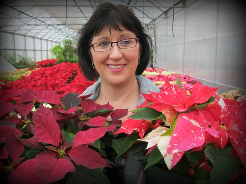 Heather and Poinsettias