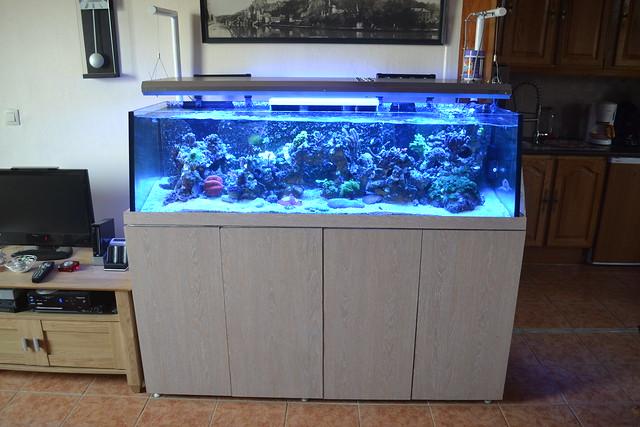 Luc's shallowreef tank 7016051869_d01d4de6d5_z