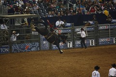 bull(0.0), barrel racing(0.0), animal sports(1.0), rodeo(1.0), sport venue(1.0), event(1.0), equestrian sport(1.0), sports(1.0), arena(1.0), bull riding(1.0),