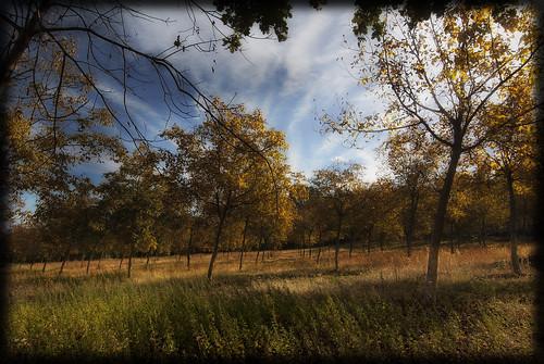 foglie alberi nuvole natura cielo colori paesaggio bosco