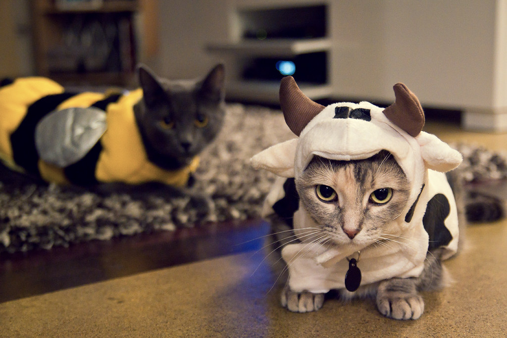 6265612984 91f10d1406 b A Caturday Collection, Cats in Costumes Ready for Halloween
