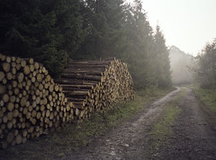on the logs.