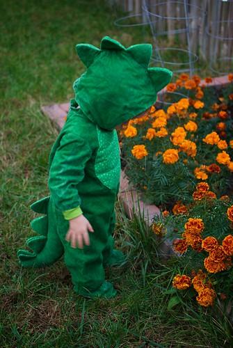 A Dinosaur amongst the marigolds.