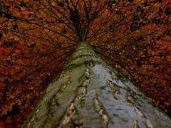 Gelbe Blätter in der Nacht