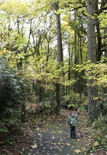 autumn foliage leaf walk in tryon creek state park    MG 1702v