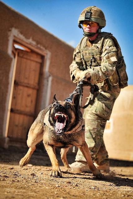 Image Result For Dog Training Webster