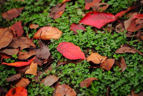 秋の横溝屋敷
