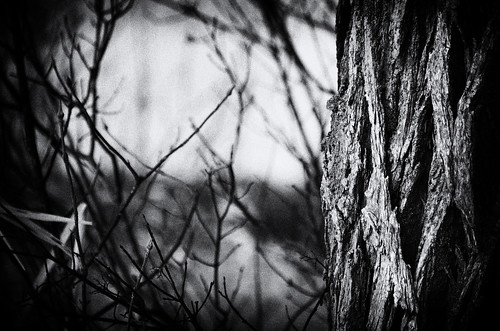 camera bw white ontario canada black tree art grass forest silver out lens geotagged photography photo interesting mac weeds aperture woods nikon long flickr zoom bokeh branches south grain wb images lynn h bark trunk getty pro nik nikkor armstrong stormont vr licence afs request dx sault attribution ingleside 2011 ifed 18200mm f3556 noderivs vrii efex d7000 lynnharmstrong