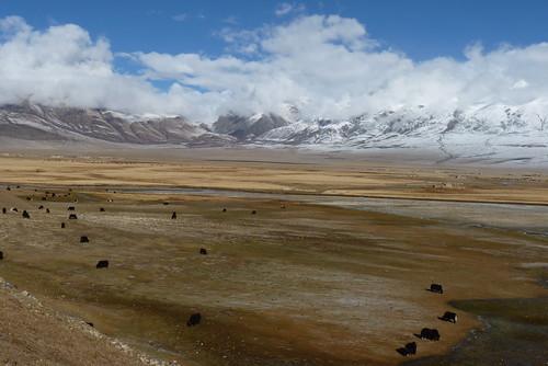 Tibet 409
