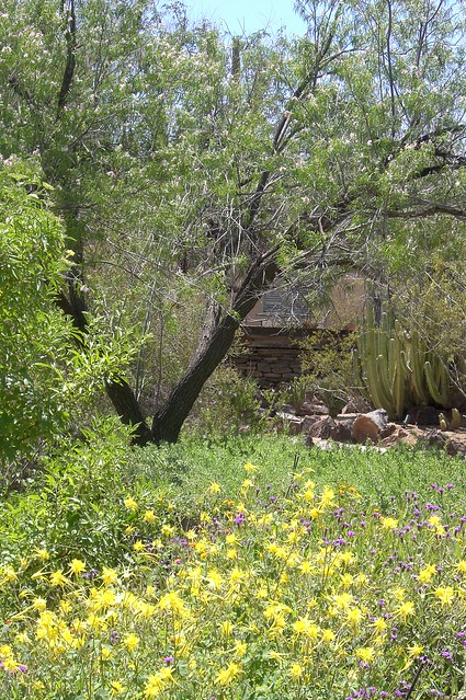 Desert Botanical Garden Coupon Release Date Price And Specs
