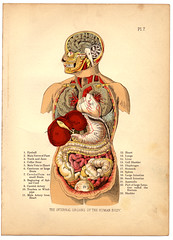 Internal Organs of the Human Body from The Household Physician, 1905 por crackdog