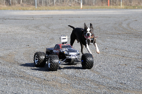 Leroy chasing RC car
