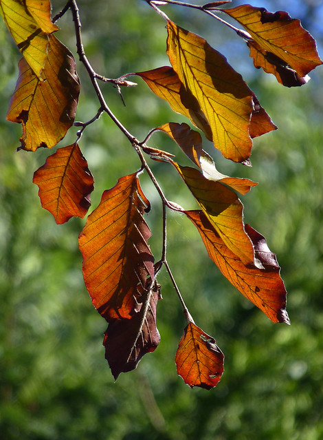 Autumn leaves - I just couldn't resist...