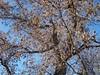 autumn trees_13