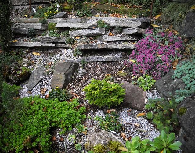 Our small crevice rock garden flickr photo sharing - Considerations small rock garden ...