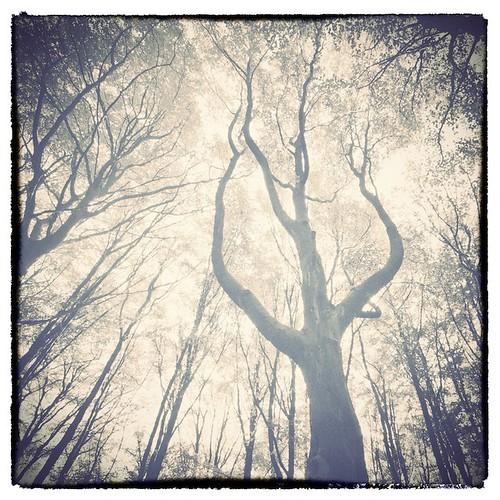 uk trees forest woodland gloucestershire fantasy ent sigma1020mmf456exdchsm standishwood
