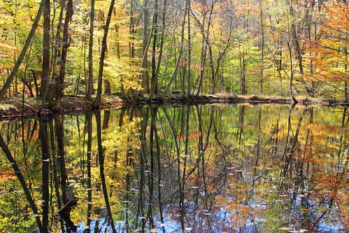 "autumn nature foliage jockeyhollow morriscounty ""flickraward"""