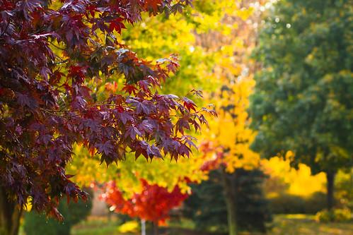 fall-0020.jpg