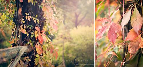 Conforme truena, los oídos del bosque se llenan de hojas (M. Benedetti)