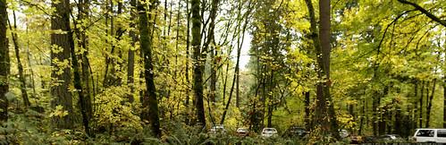 autumn foliage leaf walk in tryon creek state park