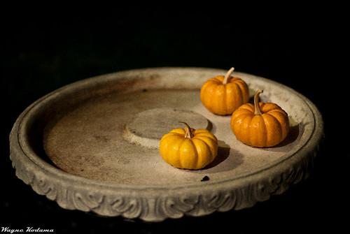 Pumpkins by Wayne-K