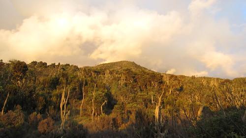 kilimanjaro tanzania afrika 2011