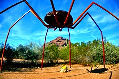 Gigantic spider of dreams