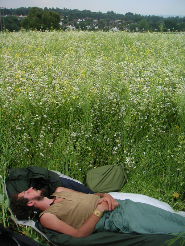 meadow snooze