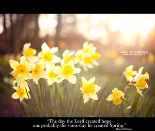 """The day the Lord created hope was probably the same day he created Spring"""