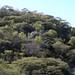 Bosque - forest; cerca de Mariscala de Júarez, Oaxaca, Mexico por Lon&Queta