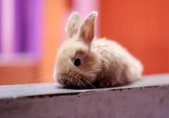 [フリー画像素材] 動物 1, 哺乳類, 兎・ウサギ ID:201203111000
