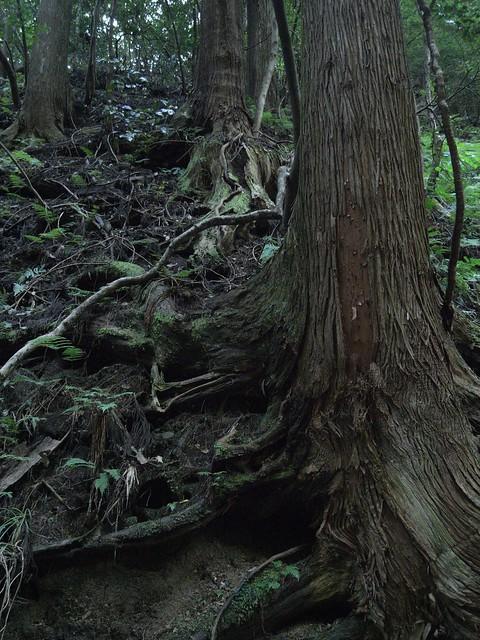 壇鏡の滝周辺の木