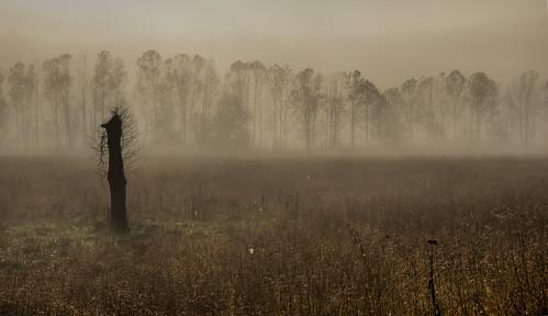 trees nature fog dawn smokymountains cadescove ngm herowinner ultraherowinner thepinnaclehof npgm tphofweek122