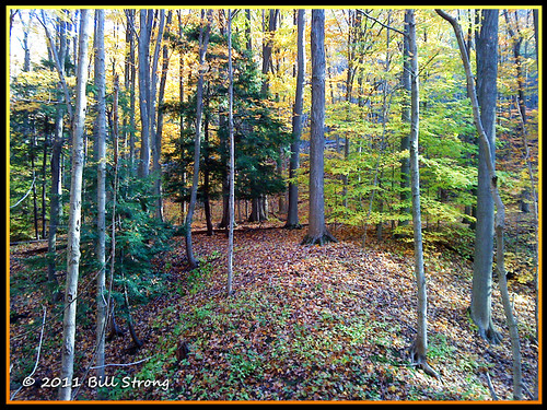 autumn fall geocaching hiking stcatharines brucetrail sonyw705a