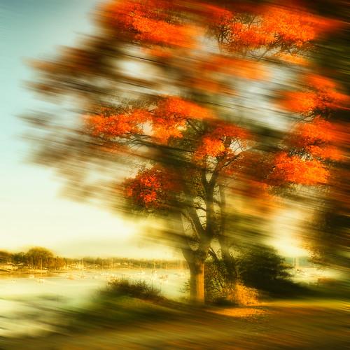 autumn red blur tree fall wind thegalaxy galleryoffantasticshots