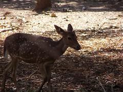 Deer :)