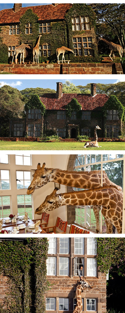 Giraffe Manor_rev