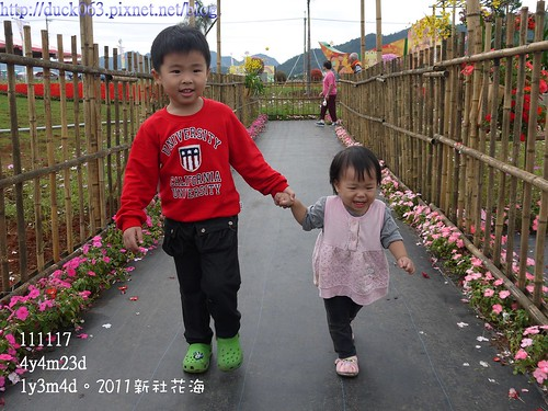 P1130151花海