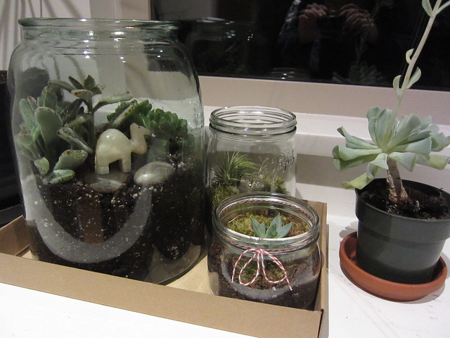 Succulents and birthday terrariums