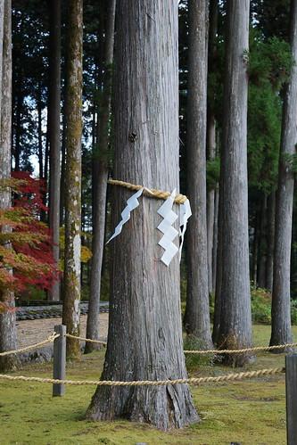 古峰神社の御神木
