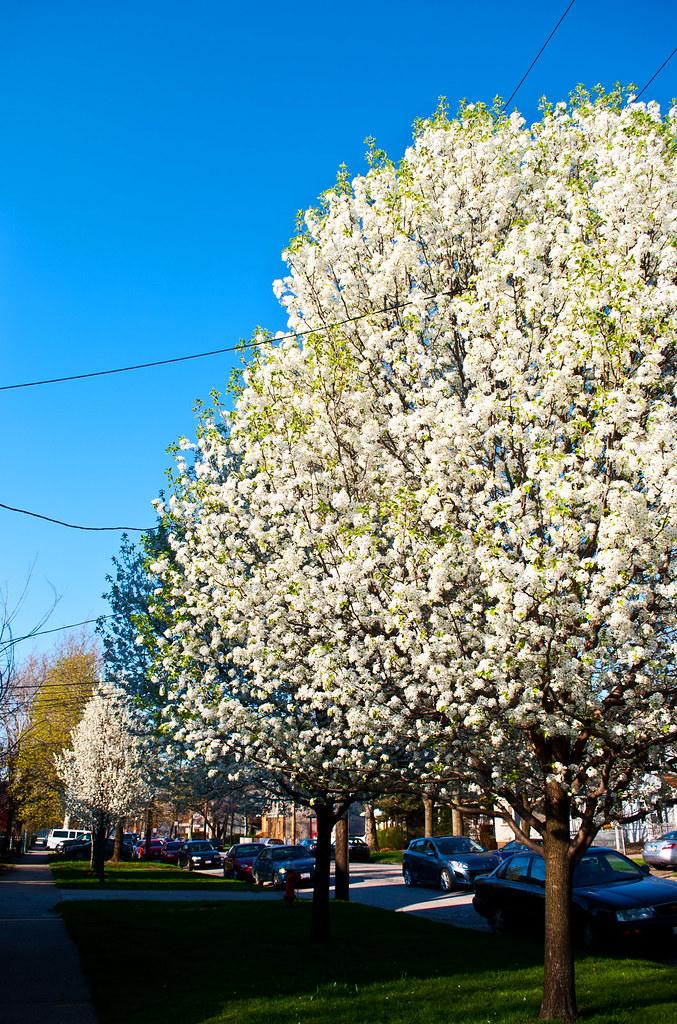 365-270 Stinky Tree