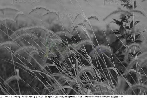 park parque grass indianapolis parc 公園 puisto eaglecreek – парк 2011 jezevec 공원 สวนสาธารณะ インディアナポリス côngviên 印第安納波利斯 인디애나폴리스 ινδιανάπολη badger23 pàirce 20110926