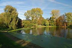 Arbres au petit étang