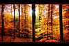 - Farbexplosion im Herbstwald - by Haldorfer