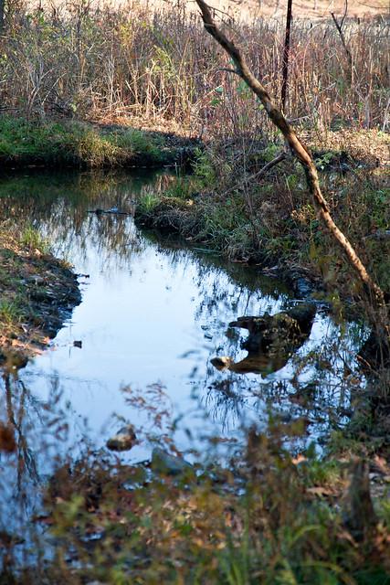 Five Rivers - Delmar, NY - 2010, Nov - 06.jpg