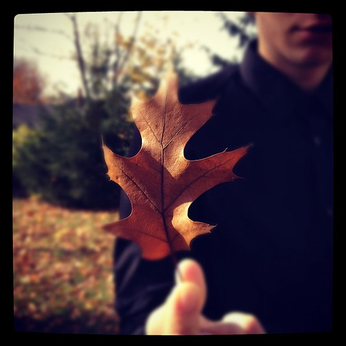 Puppy gave us a leaf