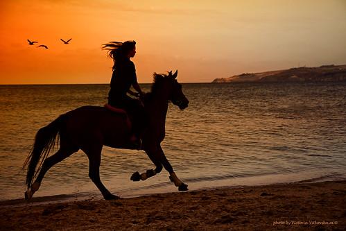 girls sunset sea horse woman beach nature girl beauty animals silhouette landscape view wind dream shore 1001nights mygearandme blinkagain bestofblinkwinners
